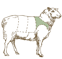 Butcher Lamb Diagram- Shoulder